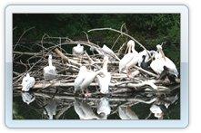 Фотографии обитателей зоопарка
